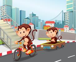 Monkey riding bicycle in town