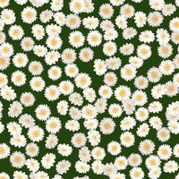 Chamomile seamless pattern. Daisies on green background.