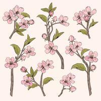 Albero fiorito Imposta raccolta. Rami di fiori rosa botanico disegnati a mano su fondo beige. Illustrazione vettoriale