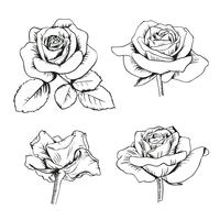 Set collection of enfraved roses with leaves isolated on white background. Vector illustration