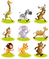 Animales corriendo