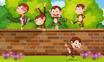 A group monkey playing at brick wall