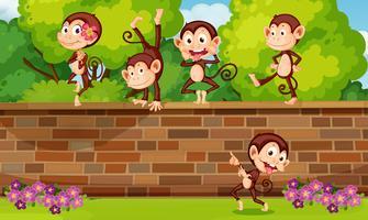 A group monkey playing at brick wall
