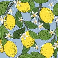 Seamless pattern of branches with lemons, green leaves and flowers on blue. Citrus fruits background. Vector illustration