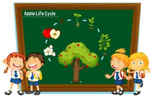 Students and diagram of apple life cycle