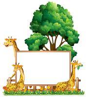 Plantilla de tablero con tres jirafas en el parque