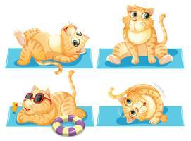 Set av katt avkopplande