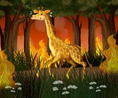 A giraffe running away from wildfire forest