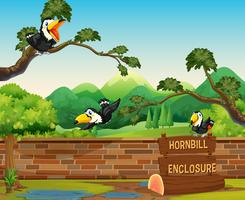 Scene with three hornbill birds in zoo