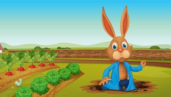Um coelho em uma fazenda