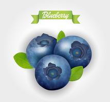 Blueberry. Vector illustration.