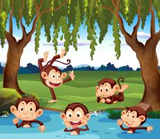Mono jugando en la naturaleza