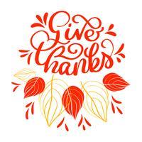 Hand gezeichnet Geben Sie Danke Typografietext. Feierzitat für Grußkarte, Postkarte, Ereignisikonenlogo oder -ausweis. Vektorweinleseart-Herbstkalligraphie. Rote Beschriftung mit roten Ahornblättern