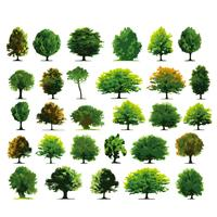 Trees Wood set vector design illustration template