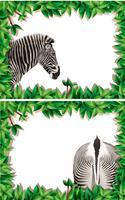 Un conjunto de cebra en marco de naturaleza