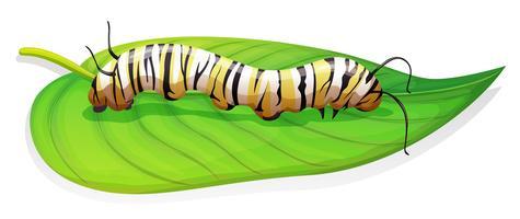 Monarkfjäril - Danaus plexippus - larvstadiet