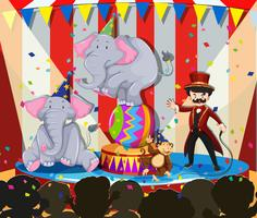 Animal show at the circus