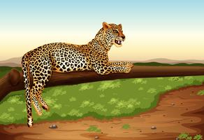Leopardo vector
