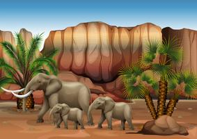 Elephants at the desert