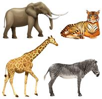 Four African animals