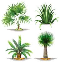 Palm plants vector
