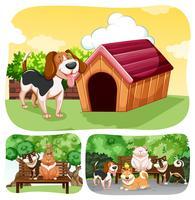 Perros y gatos en el parque.
