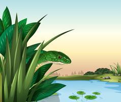 En grön orm vid dammen