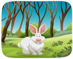 Coniglio bianco nella scena della natura