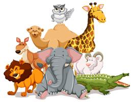 Vilda djur och växter