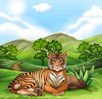 Tigre sentado no campo
