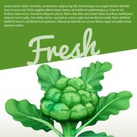 Infographic design with fresh broccoli