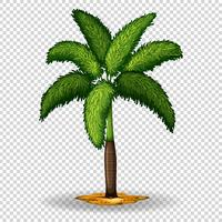 Palm tree on transparent background