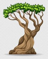 Big tree on transparent background vector