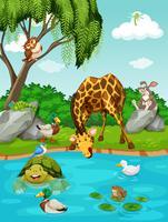 Animais selvagens pelo rio
