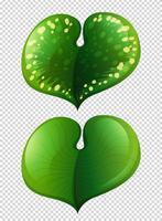 Deux types de feuilles sur fond transparent