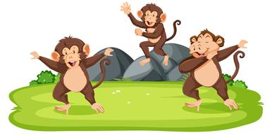 Affen in freier Wildbahn