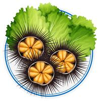 Fresh sea urchins and green vegetables on plate