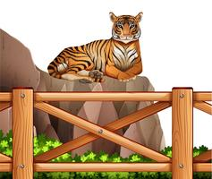A tiger above the cliff