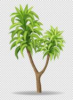 Green tree on transparent background