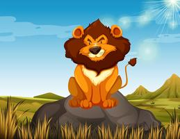 León salvaje sentado en la piedra