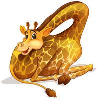 Girafa gira dobrando seu pescoço