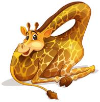 Linda jirafa doblando su cuello