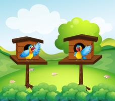 Two parrots in birdhouse