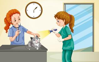 Vet examining little cat