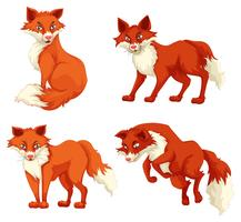 Four foxes in different poses