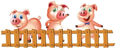Three pigs behind the fence