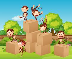 Monkeys climbing up the boxes