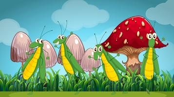 Vier Heuschrecken auf dem Rasen