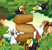 Animais selvagens em torno da placa de madeira na floresta