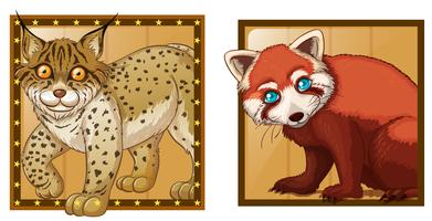 Tiger and red panda on square badges